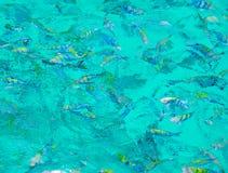 Snorkla i det öppna havet Fotografering för Bildbyråer