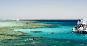 Snorkla i Röda havet, Egypten Royaltyfri Bild