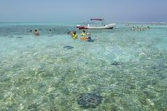Snorkla och stingrockor Belize Fotografering för Bildbyråer