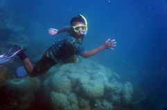 Snorkling Stock Image