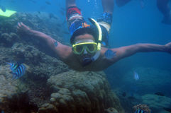 Snorkling Stock Photography