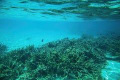 Snorkling, vue magnifique de monde sous-marin Les récifs coraliens morts, l'herbe de mer, le sable blanc et la turquoise arrosent image libre de droits