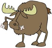 Snorting moose Stock Photography