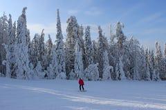 Snouboaring nella foresta di inverno Fotografia Stock Libera da Diritti