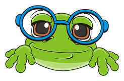 Snout of frog in glasses Stock Photography