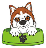Snout of orange husky in bowl Stock Photo