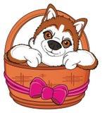 Snout of orange husky peek up from basket Stock Photos