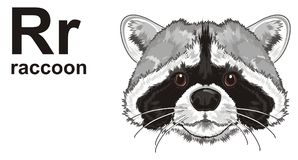 Snout of raccoon with abc. Muzzle of raccoon with his name and letters r vector illustration