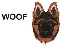 Puppy say woof. Snout of shepherd with black word woof Stock Images
