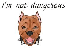 Snout of staff withinscription. Snout of brown pitbull with words  i`m not dangerous Royalty Free Stock Photos