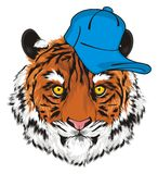 Tiger boy in cap. Snout of tiger boy in blue cool cap Stock Photography