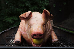 Snout view of a pig on a grill Royalty Free Stock Image