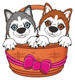 Snouts of husky in basket Stock Image