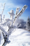 Snow. World of ice and snow Royalty Free Stock Images