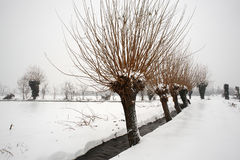 Snow. Ospitaletto (Bs),Franciacorta,Lombardy,Italy,the snow in countryside Stock Images