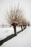Snow. Ospitaletto (Bs),Franciacorta,Lombardy,Italy,the snow in countryside Royalty Free Stock Images