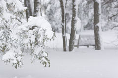 Snow. Heavy snow on the tree branches Stock Photography