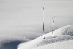 Snow. Beautiful snow landscape with two lonely straws stock photo