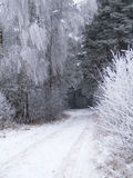 Snow. Lonely frozen winter road in forests Royalty Free Stock Photos