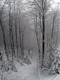 Snow. In the woods Royalty Free Stock Photography