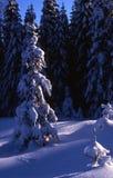 Snow Royalty Free Stock Photo