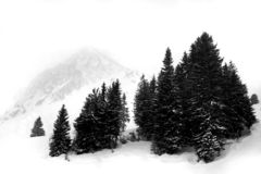 Snow. Landscape with trees and mountains Stock Photography