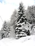 Snow. Some trees after snow. Italian Alps Stock Images
