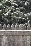 Falling snow on evergreen and fence. Royalty Free Stock Photo