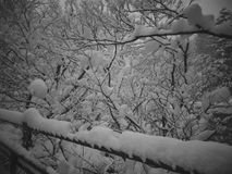 Snow all over the park  in the cloudy smog day - Black and White Stock Photos