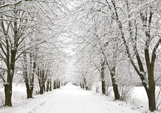 Snow alley Stock Photography