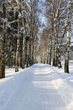 Snow alley Royalty Free Stock Photos