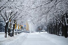 Snow alley Stock Image