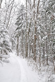 Snow alley, forest Stock Images