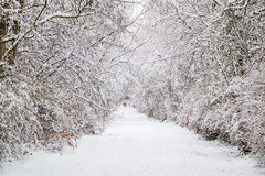 Snow alley royalty free stock photo