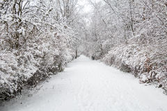 Snow alley. Alley in forest, trees with branches in snow Royalty Free Stock Photos