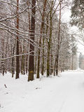 Snow alley road in winter forest. Stock Images