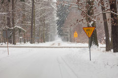 Snow alley road in winter forest. Stock Image