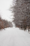 Snow alley road in winter forest. Royalty Free Stock Photo