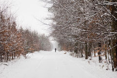 Snow alley road in winter forest. Royalty Free Stock Photos