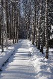Snow alleyway in a Winter Park XXXL Royalty Free Stock Photos