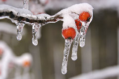 Free Snow And Ice Storm Royalty Free Stock Photography - 1698257
