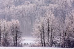 Free Snow And Ice Storm A Lake And Waterfowl Stock Photography - 140056842