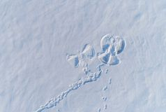Free Snow Angel`s Print On A Snowcovered Area. Aerial Foto. Royalty Free Stock Photography - 130601087