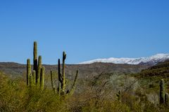 Snow in the Arizona desert, north of Tucson, Arizona an weather event brought snowfall to the mountains with saguaro cacti and. Snow in the Arizona desert, of stock photo