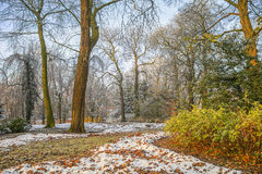 Snow in autumn park Stock Image