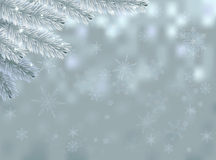 Snow background with fir branch Stock Photos