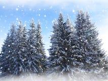 Snow background. Fir trees. Stock Photos