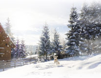 Snow background. Fir trees. Dog in the snow.Mountain cottage Stock Images