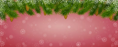Snow background. With the fri-tree and cones Stock Photography