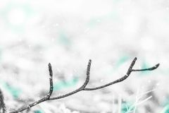 Snow background and pine branch. Christmas background and blank space. stock image